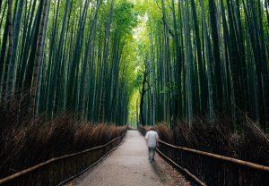 bamboo-o-bambu